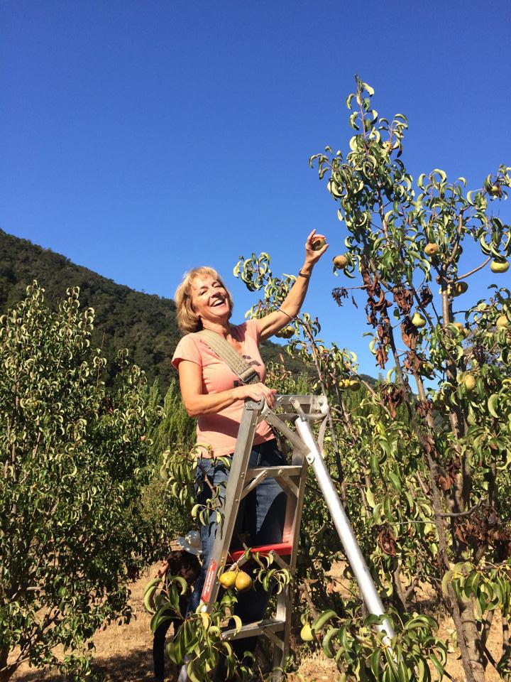 Happy woman picking fruit off a tree